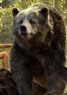 巴鲁、棕熊
